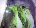 11-x-15-frog